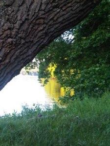 tree-light-water-blog