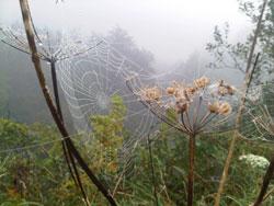 misty-web