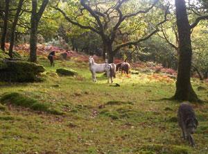 pony-grove-1
