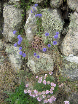 best-scabious-thrift-&-lichen-blog