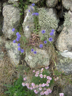 best-scabious-thrift-%26-lichen-blog
